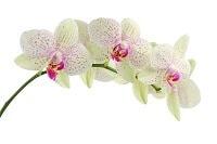 Blumen Bedeutung Orchideen