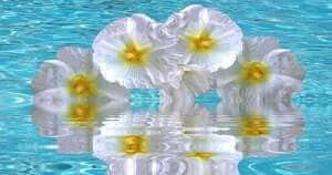 Blumen Bedeutung